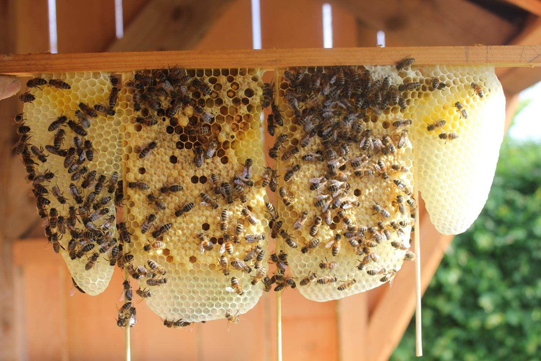 Biologische honing uit de Achterhoek - Wijndomein Erve Wisselink Eibergen