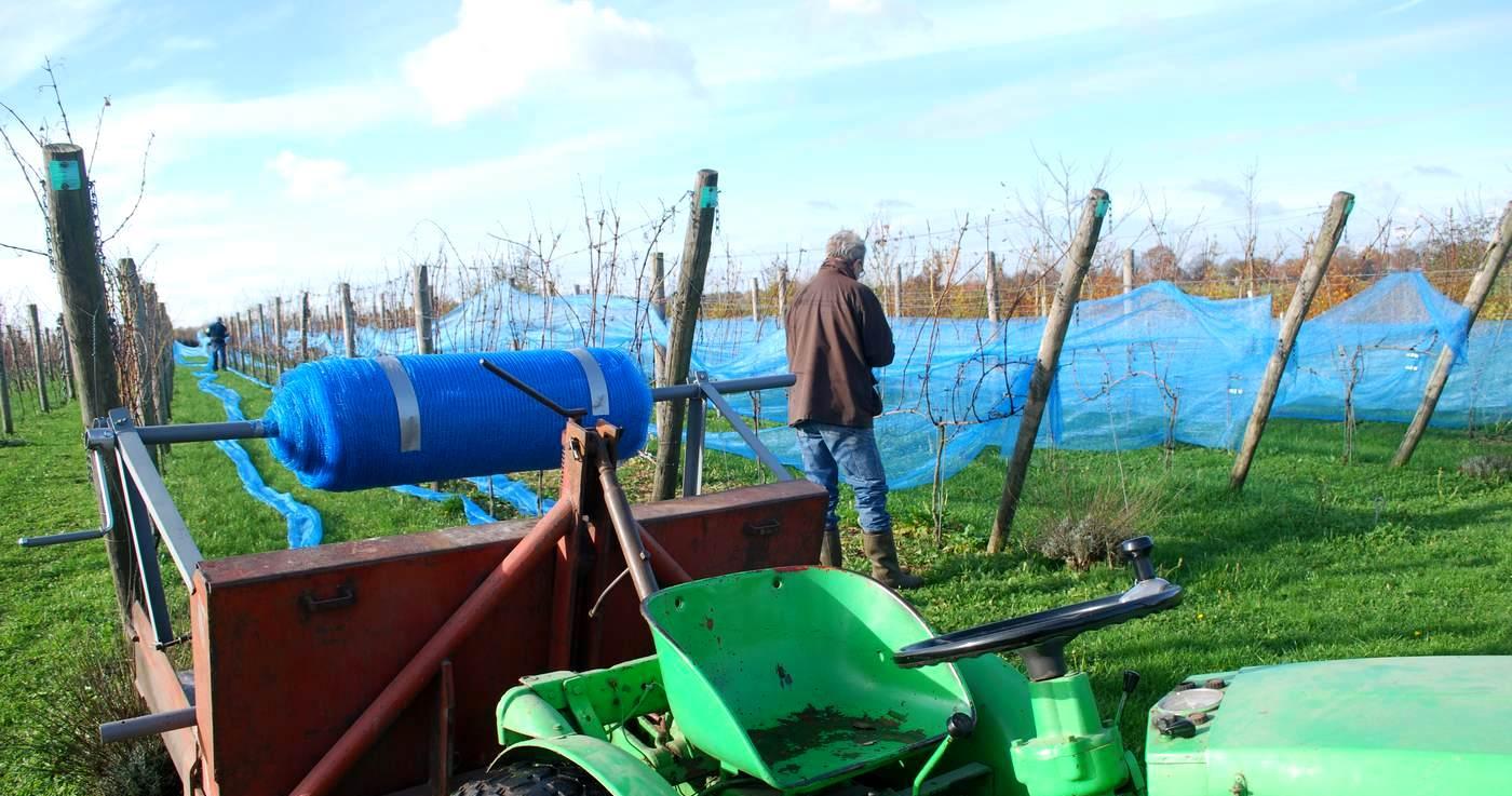 Nederlandse Wijngaard - Wijndomein Erve Wisselink in Eibergen - Achterhoek - Gelderland