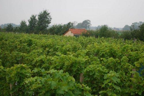 Nederlandse wijn kopen bij Wijndomein Erve Wisselink in de Achterhoek